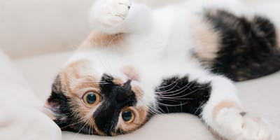 Stomach or Abdomen Upset? (for Pets)