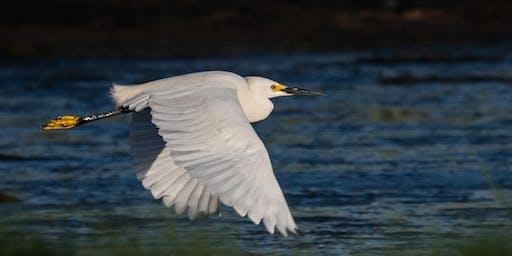 Summer Birds of Pickering Pond