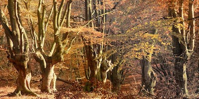 Photography Walk in Epping Forest