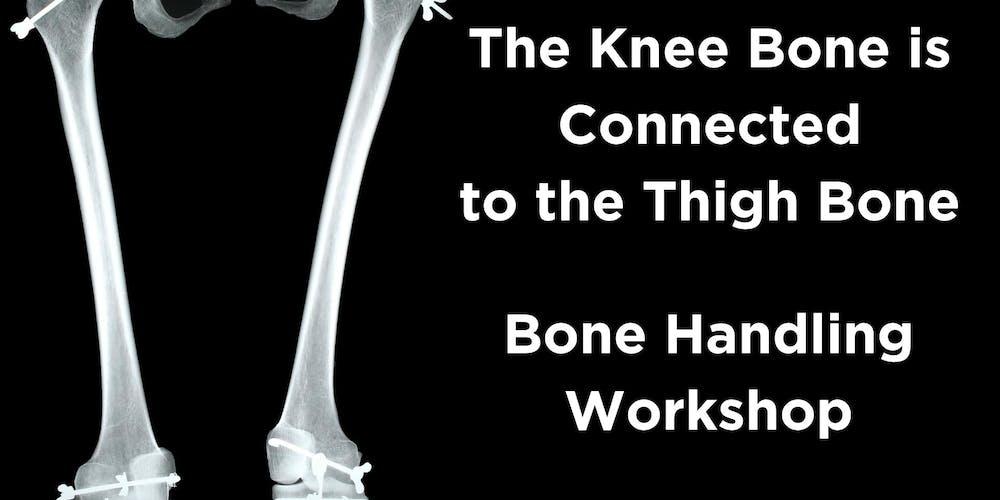 The Knee Bone Is Connected To The Thigh Bone Bone Handling Workshop
