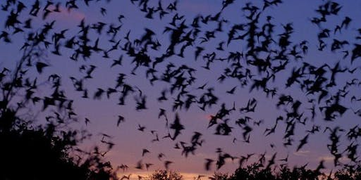 Beginners Bat Walk at Kingsbury Water Park