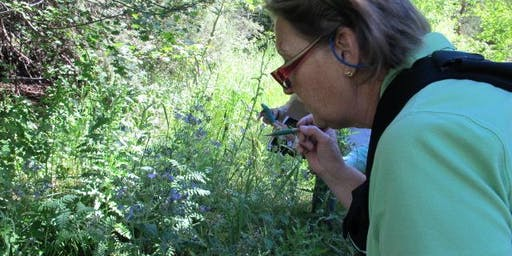 Wetland/Riparian Plants of the Front Range - Thurs., August 15; 8:30 AM - 12:30 PM