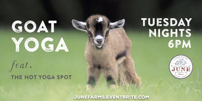Tuesday Night Goat Yoga, Tacos & Beer/Wine at June Farms