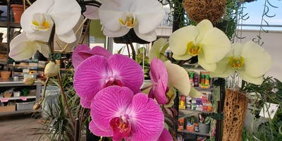 All About Orchids