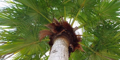 Caring for Palm Trees