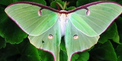 New Beginnings - Luna Moth Intuitive Painting