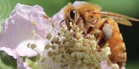 Beekeeping & Beyond Workshop #6 tickets