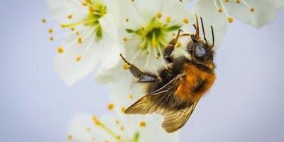 Save the Bees Talk - Mornington Library