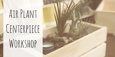 Air Plant Centerpiece Workshop at Nature's Kindle PDX
