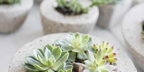 Concrete Planters for Succulents