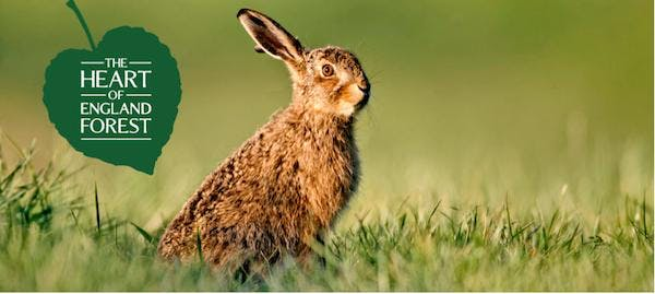 Guided Walk: March Hares, Woodland and Waterf