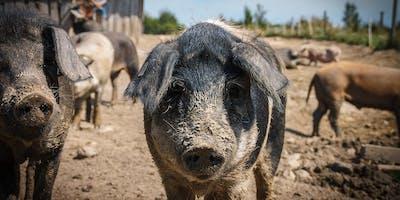 Am Tisch mit Freunden: 100% Freilandschwein