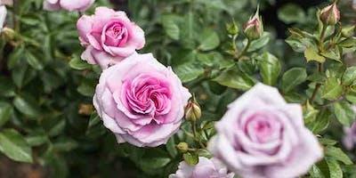 Rose Pruning Seminar