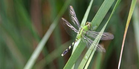 IJAMS Nature Nuggets: Dragonflies tickets