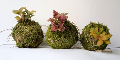workshop di Kokedama