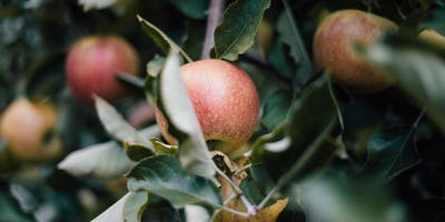 Perennial Polyculture Design: An Intro to Fruit Tree Guilds
