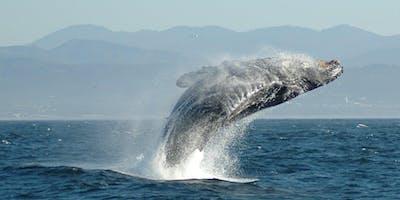Ocean Day 2019  Wildlife Sail on San Francisco Bay