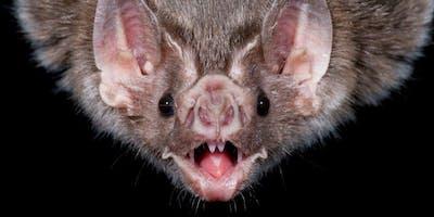 IJAMS Nature Nuggets: Bat and Moth