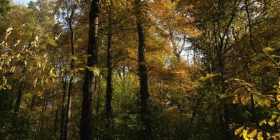 IJAMS Nature Nuggets: Forests