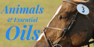 Horses and Essetial Oils