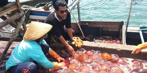 RED JELLY FISH FESTIVAL - 3 Days / 2 Nights ( HARVESTING SEASON )