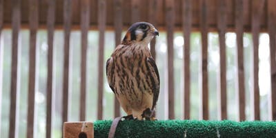 Raptology: Iowa's Birds of Prey (School Age)