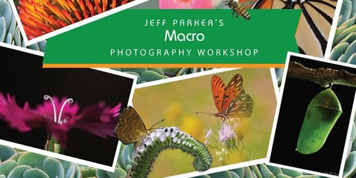 MACRO Photography Class in Central Texas