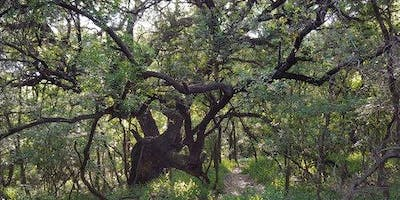 The Spirit Among the Great Oaks