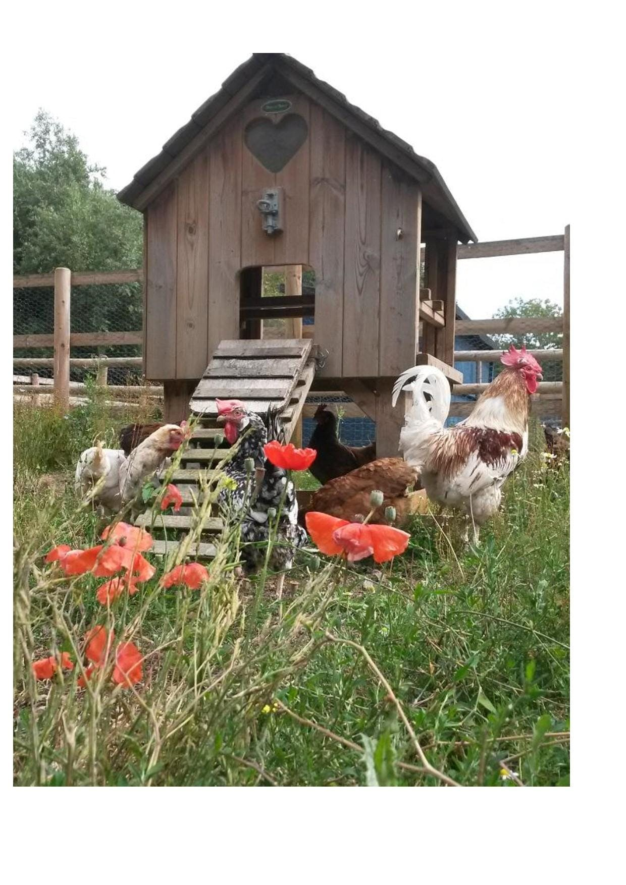Introduction to Smallholding, the theory and