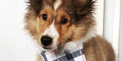 Puppy Preschool: Life Skills for Good Dogs