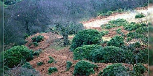 Mynydd y Castell - Iron age hillfort