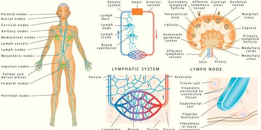 Lymphatic Drainage Massage with Christine Courtney and Ethics with Laura Allen