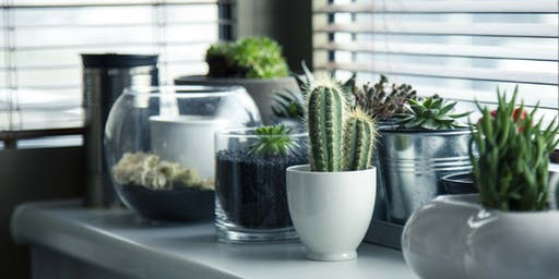 Lunch & Learn: Fun and Unusual Plants You Can Grow!