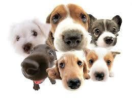 Puppy Training 8 Week Course - Bluebell Hill