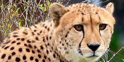 A Taste of Travel African Safari