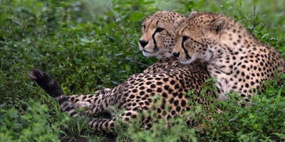 Photo Safari 102: Wildlife Photography: w/Mark Comon!
