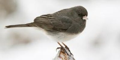Great Backyard Bird Count Hike