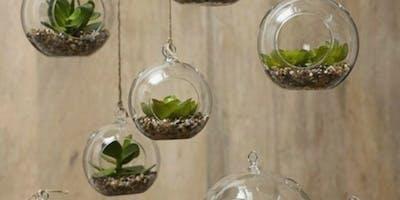 DIY: Terrariums and Air Plants