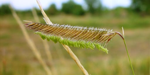 Discover! Grasses of South Platte Park - Sun., September 8; 8:30 AM - 12:30 PM
