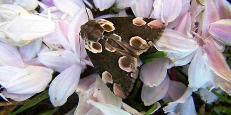 Moth Breakfast 2019 at Ryton Pools Country Park tickets