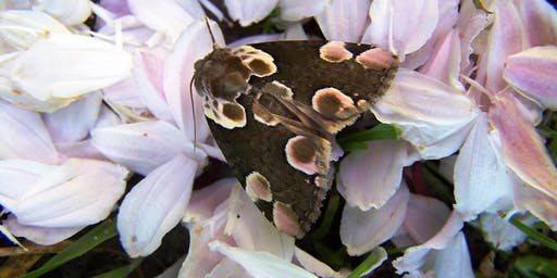 Moth Breakfast 2019 at Ryton Pools Country Park