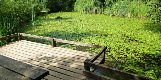 Summer Pond Dipping at Ryton Pools Country Park