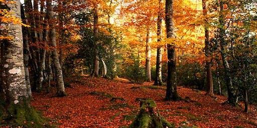Autumn Colours Estate Tour with Lunch