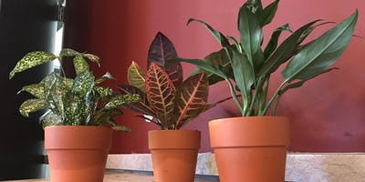 Winter Woes Workshop - House Plants w/ Green Bay Floral & Greenhouse