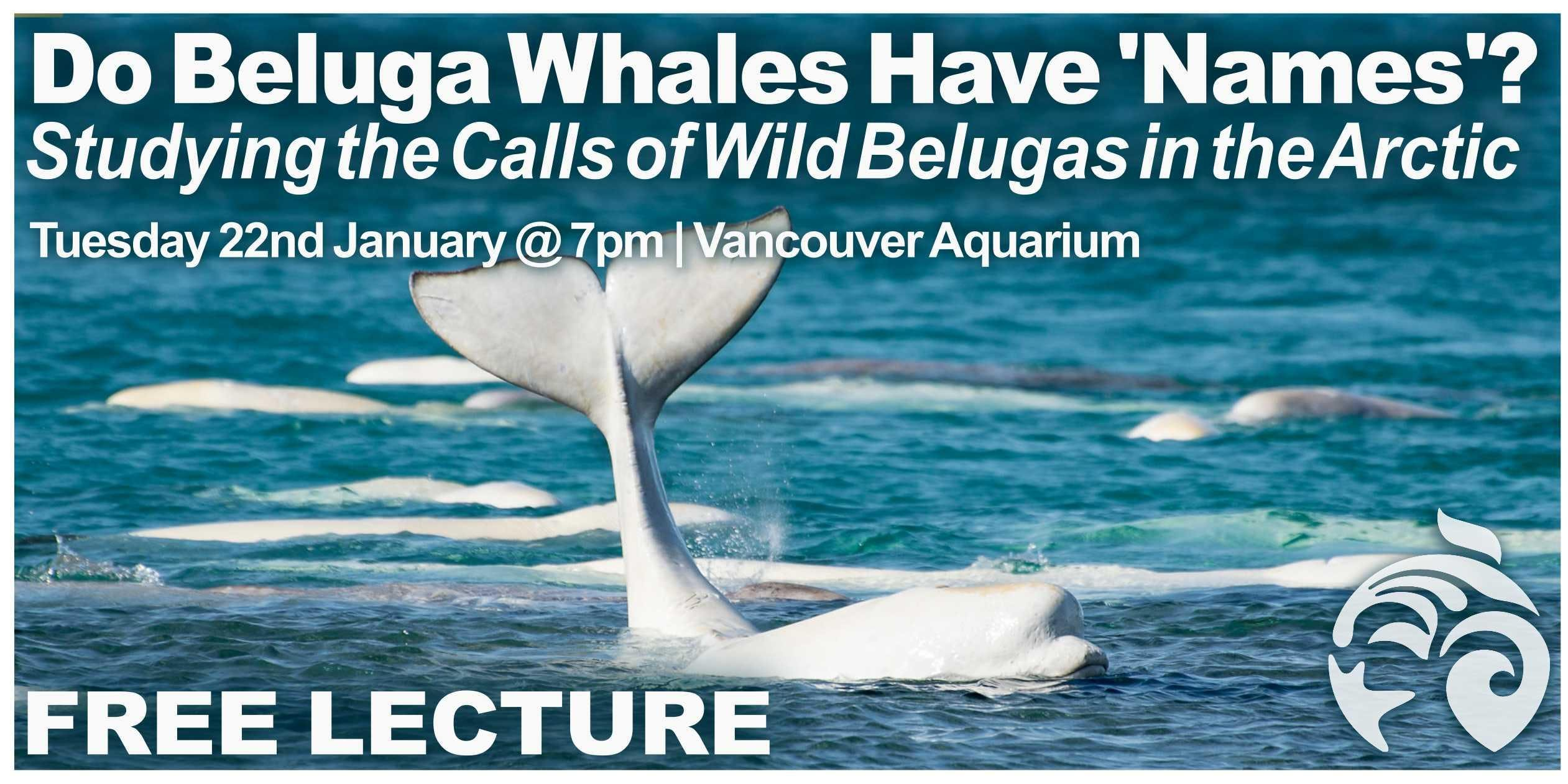 Do Beluga Whales Have 'Names'? Studying The Calls Of Wild Belugas in the Arctic (Free Lecture)