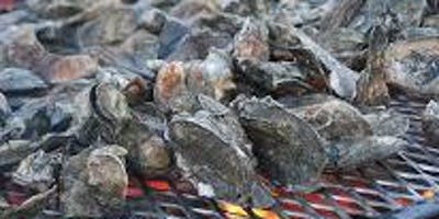 St. Michael Catholic Church Super Bowl Sunday  All You Can Eat Oyster Roast