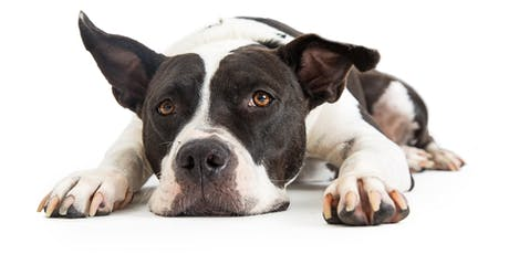 Dog Body Language Level 2 tickets