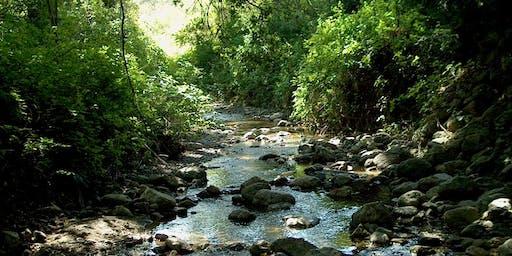 Ivy League: Habitat Restoration on San Francisquito Creek