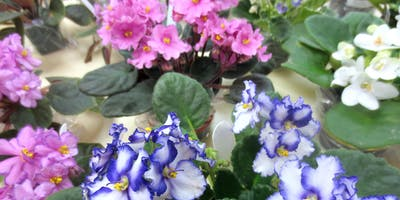 African Violet Show and Sale