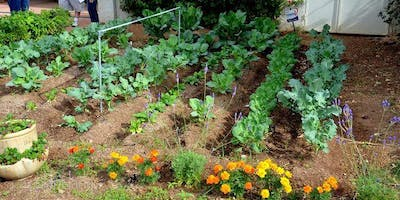 Vegetable Gardening in the Permian Basin